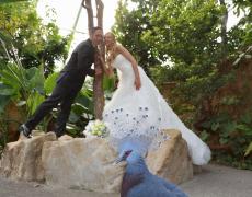 Neue Galerien von Hochzeitsfotos der letzten Zeit…